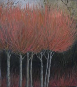 Red Trees Image